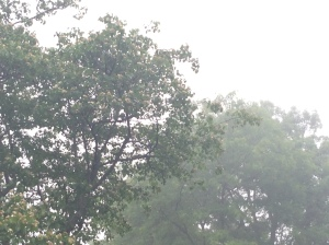 Trees at Ravinia